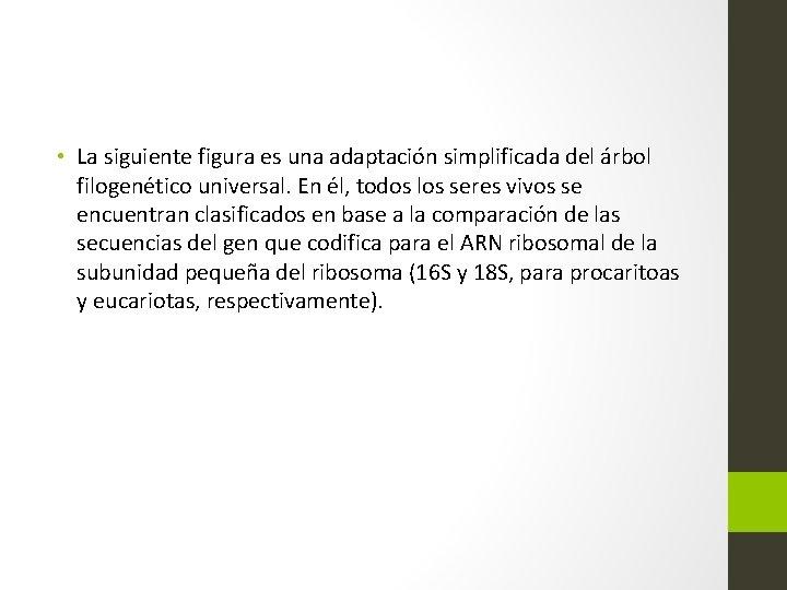 • La siguiente figura es una adaptación simplificada del árbol filogenético universal. En