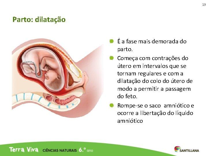 19 Parto: dilatação É a fase mais demorada do parto. Começa com contrações do