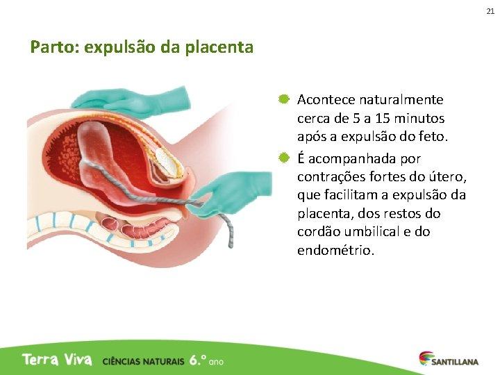 21 Parto: expulsão da placenta Acontece naturalmente cerca de 5 a 15 minutos após