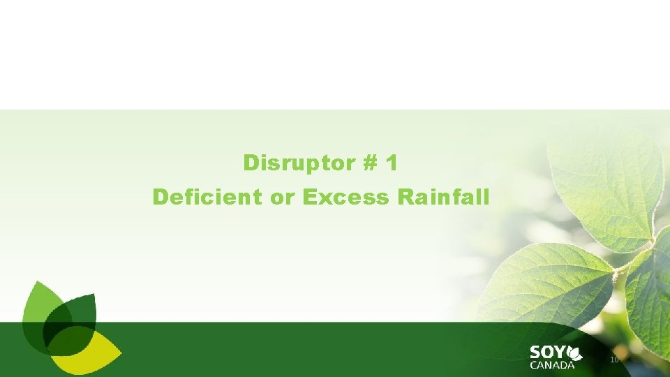 Disruptor # 1 Deficient or Excess Rainfall 10
