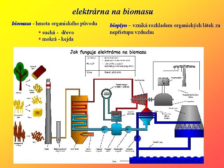 elektrárna na biomasu biomasa - hmota organického původu § suchá - dřevo § mokrá