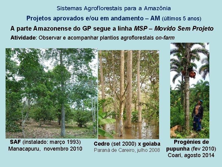 Sistemas Agroflorestais para a Amazônia Projetos aprovados e/ou em andamento – AM (últimos 5