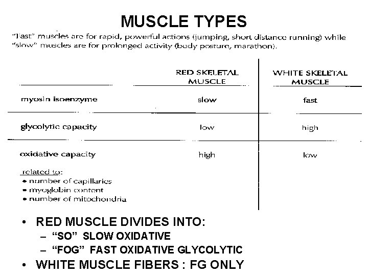 """MUSCLE TYPES • RED MUSCLE DIVIDES INTO: – """"SO"""" SLOW OXIDATIVE – """"FOG"""" FAST"""