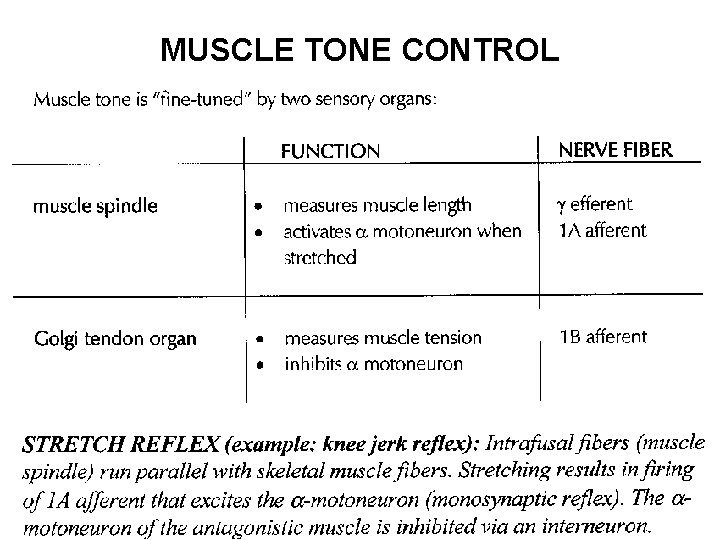 MUSCLE TONE CONTROL