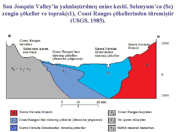 San Joaquin Valley'in yalınlaştırılmış enine kesiti. Selenyum'ca (Se) zengin çökeller ve toprak(s 1), Coast