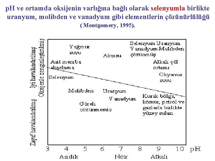 p. H ve ortamda oksijenin varlığına bağlı olarak selenyumla birlikte uranyum, molibden ve vanadyum