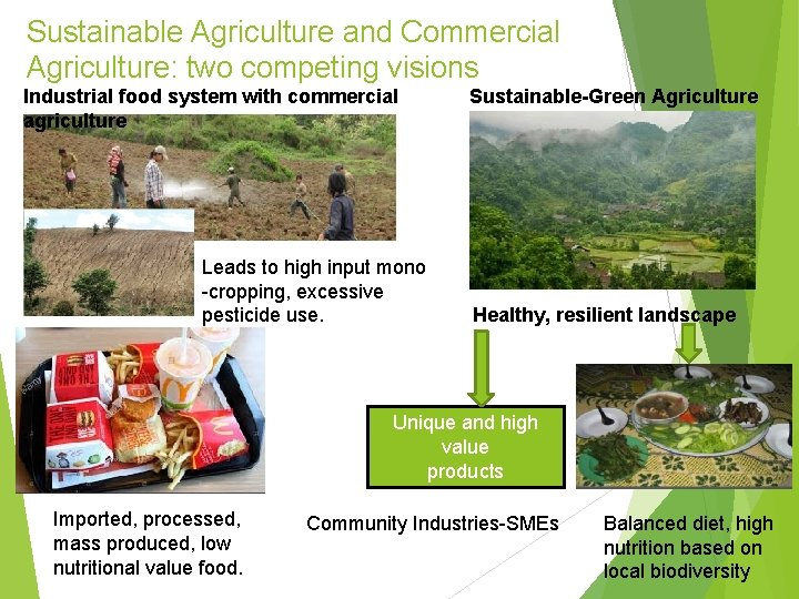 Sustainable Agriculture and Commercial Agriculture: two competing visions Industrial food system with commercial agriculture