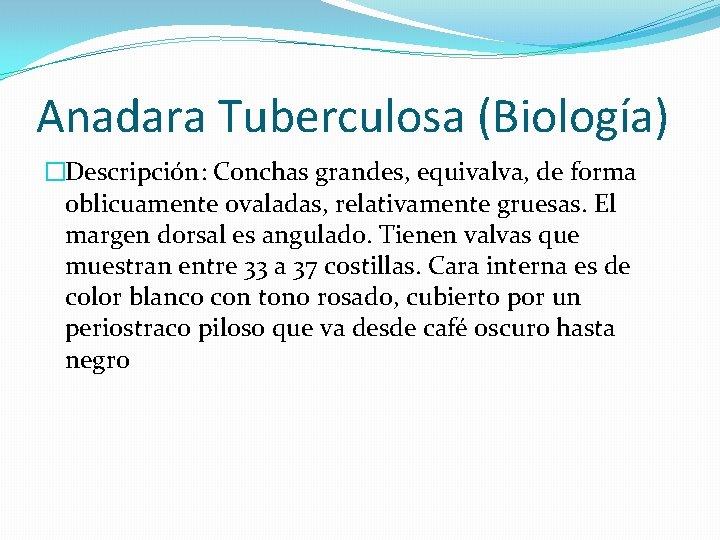 Anadara Tuberculosa (Biología) �Descripción: Conchas grandes, equivalva, de forma oblicuamente ovaladas, relativamente gruesas. El