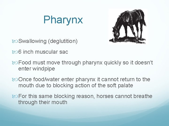 Pharynx Swallowing (deglutition) 6 inch muscular sac Food must move through pharynx quickly so