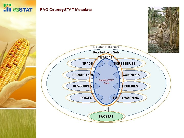 FAO Country. STAT Metadata Related Data Sets Detailed Data Sets METADATA TRADE FORESTERIES PRODUCTION