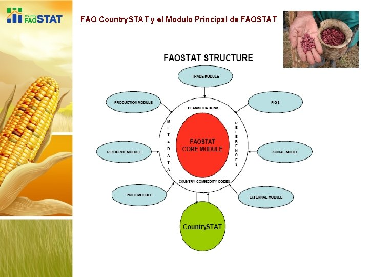 FAO Country. STAT y el Modulo Principal de FAOSTAT