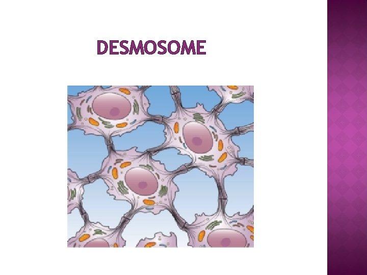 DESMOSOME