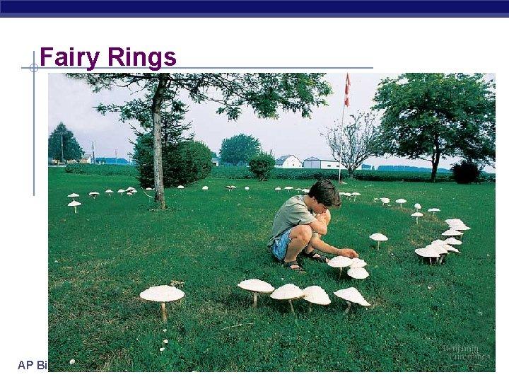Fairy Rings AP Biology