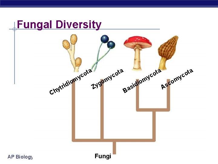 Fungal Diversity y m o idi tr hy C AP Biology ta o c