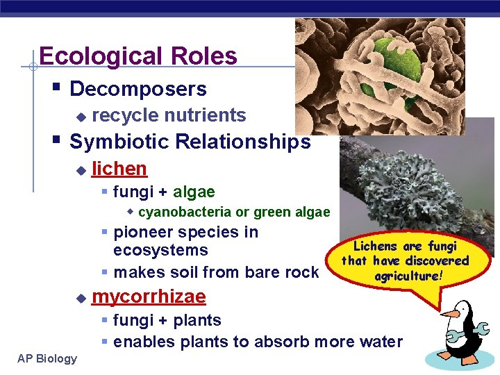 Ecological Roles § Decomposers u recycle nutrients § Symbiotic Relationships u lichen § fungi