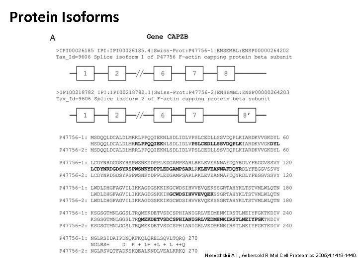 Protein Isoforms Nesvizhskii A I , Aebersold R Mol Cell Proteomics 2005; 4: 1419