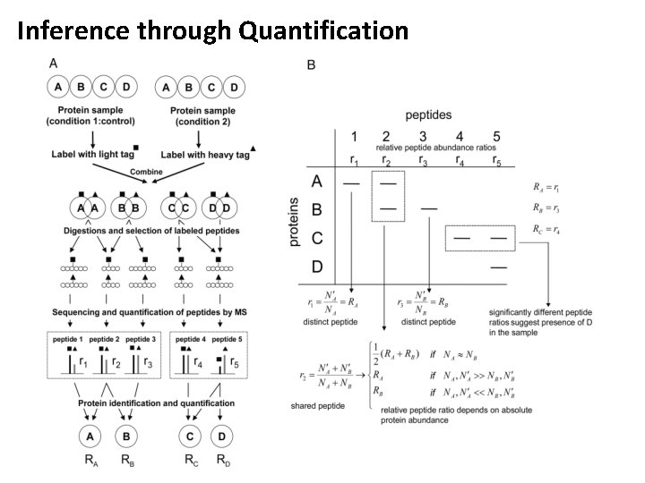 Inference through Quantification