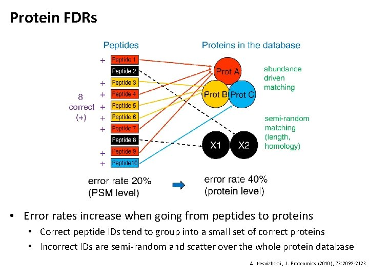Protein FDRs • Error rates increase when going from peptides to proteins • Correct