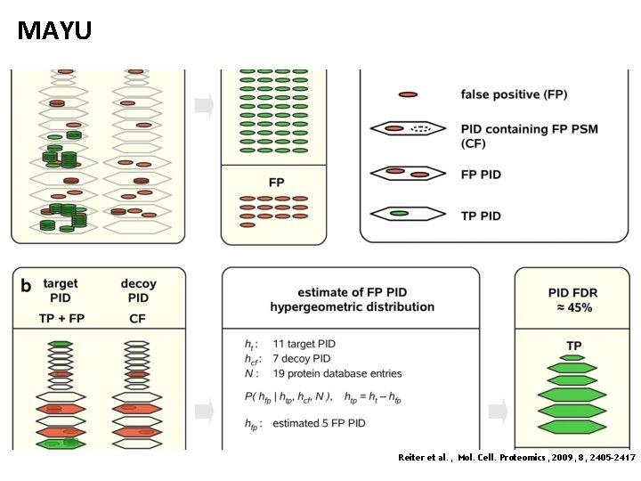 MAYU Reiter et al. , Mol. Cell. Proteomics, 2009, 8, 2405 -2417