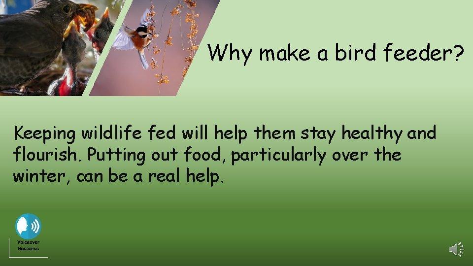 Why make a bird feeder? Keeping wildlife fed will help them stay healthy and
