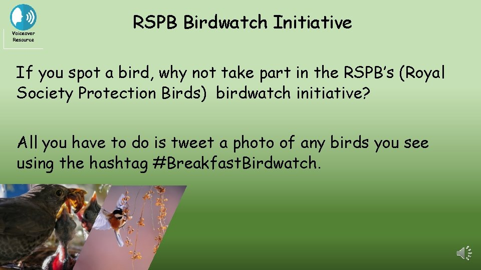 RSPB Birdwatch Initiative If you spot a bird, why not take part in the