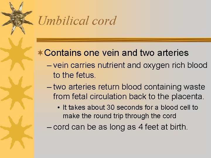 Umbilical cord ¬Contains one vein and two arteries – vein carries nutrient and oxygen