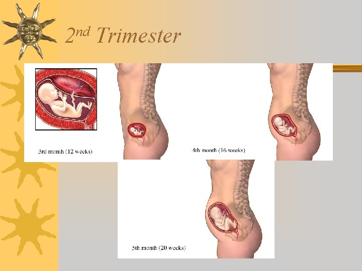 nd 2 Trimester