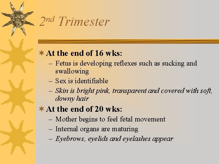 nd 2 Trimester ¬ At the end of 16 wks: – Fetus is developing