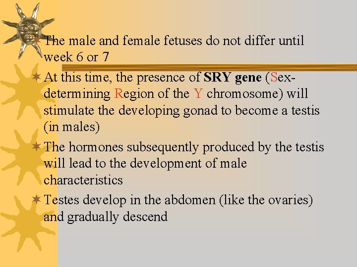¬ The male and female fetuses do not differ until week 6 or 7