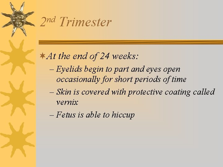 nd 2 Trimester ¬At the end of 24 weeks: – Eyelids begin to part