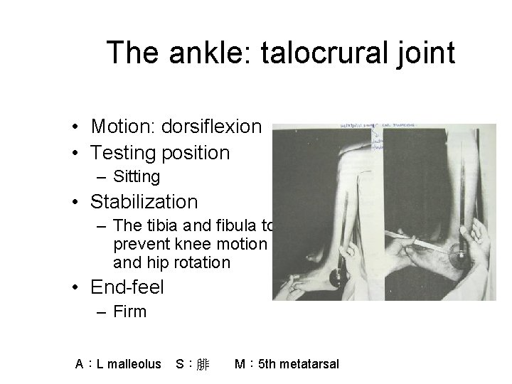 The ankle: talocrural joint • Motion: dorsiflexion • Testing position – Sitting • Stabilization
