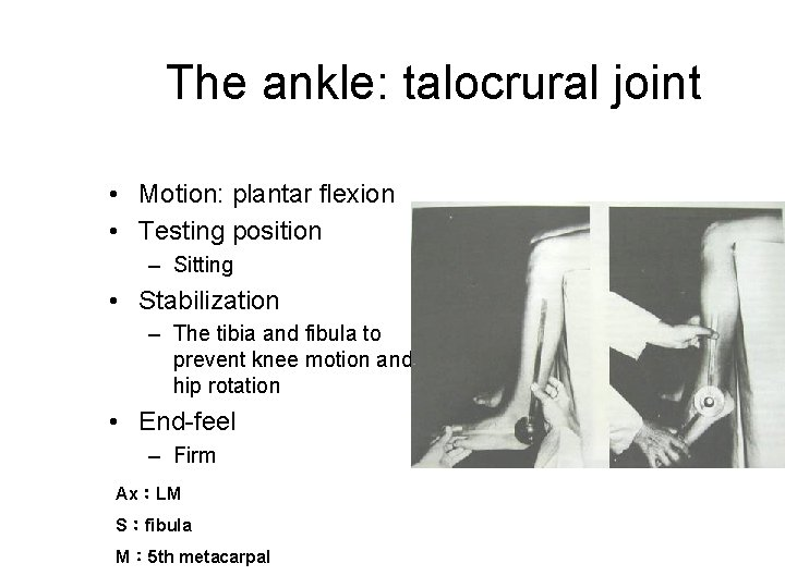 The ankle: talocrural joint • Motion: plantar flexion • Testing position – Sitting •
