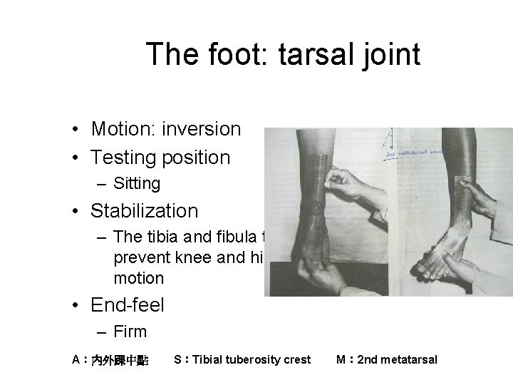 The foot: tarsal joint • Motion: inversion • Testing position – Sitting • Stabilization