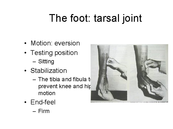 The foot: tarsal joint • Motion: eversion • Testing position – Sitting • Stabilization