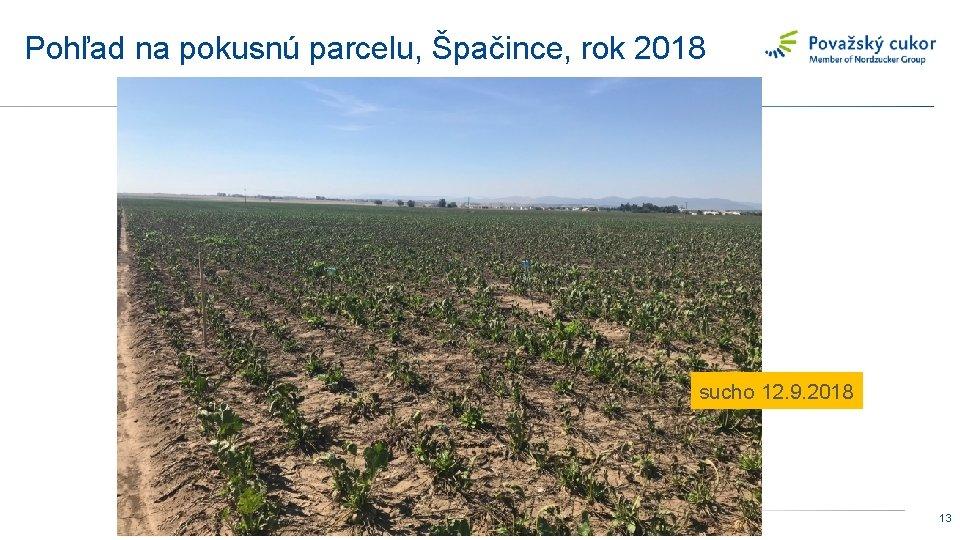 Pohľad na pokusnú parcelu, Špačince, rok 2018 sucho 12. 9. 2018 13