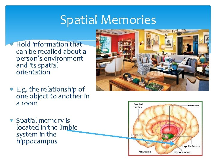Spatial Memories Hold information that can be recalled about a person's environment and its