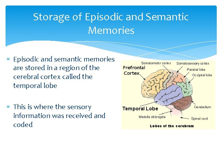 Storage of Episodic and Semantic Memories Episodic and semantic memories are stored in a