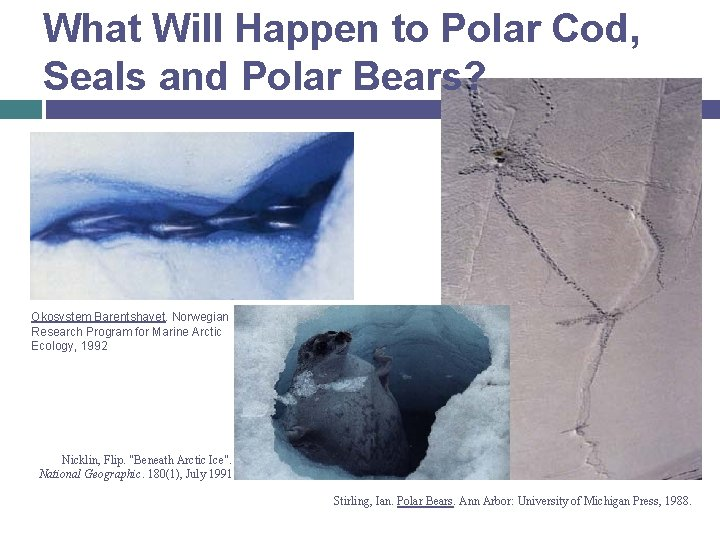 What Will Happen to Polar Cod, Seals and Polar Bears? Okosystem Barentshavet. Norwegian Research