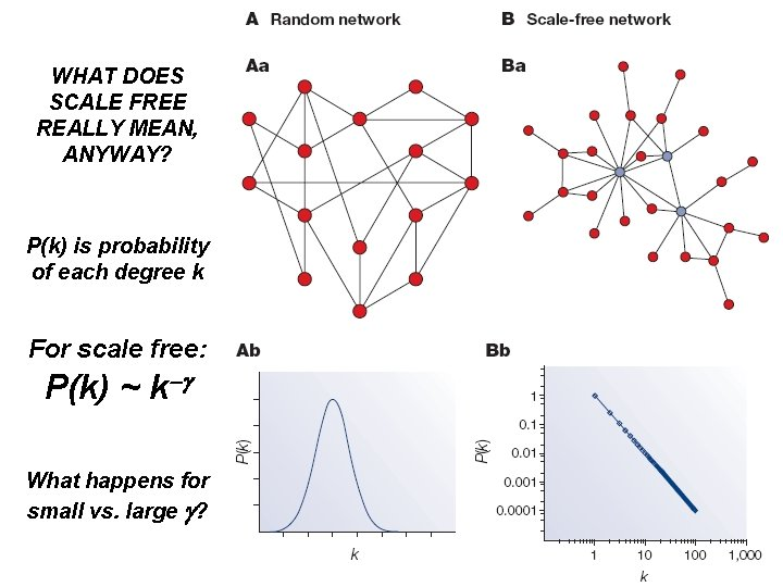 WHAT DOES SCALE FREE REALLY MEAN, ANYWAY? P(k) is probability of each degree k