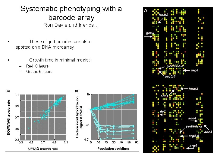 Systematic phenotyping with a barcode array Ron Davis and friends… • These oligo barcodes