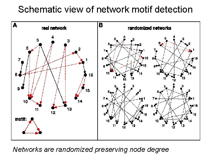 Schematic view of network motif detection Networks are randomized preserving node degree
