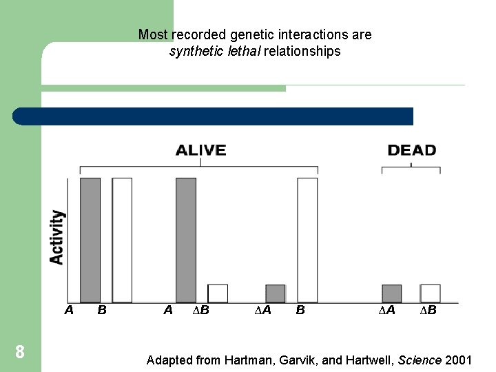 Most recorded genetic interactions are synthetic lethal relationships A 8 B A ΔB ΔA