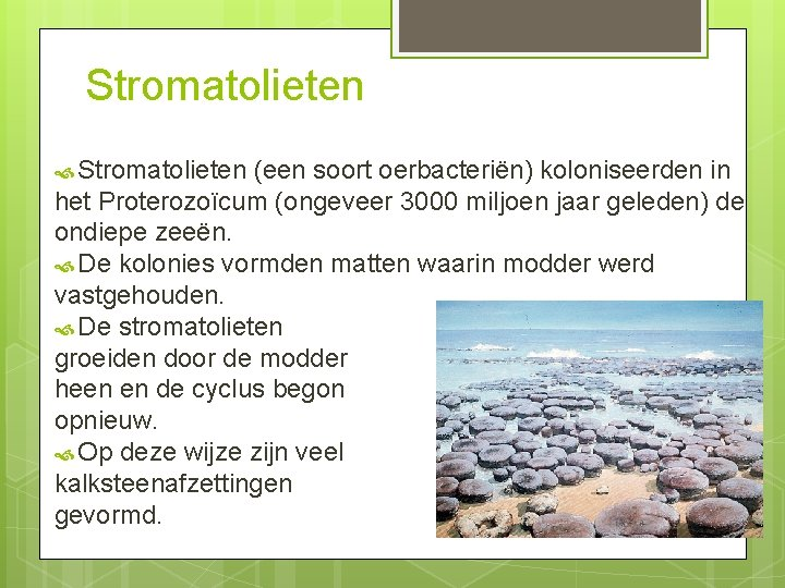 Stromatolieten (een soort oerbacteriën) koloniseerden in het Proterozoïcum (ongeveer 3000 miljoen jaar geleden) de