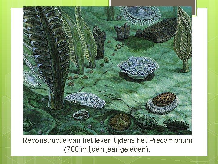 Reconstructie van het leven tijdens het Precambrium (700 miljoen jaar geleden).