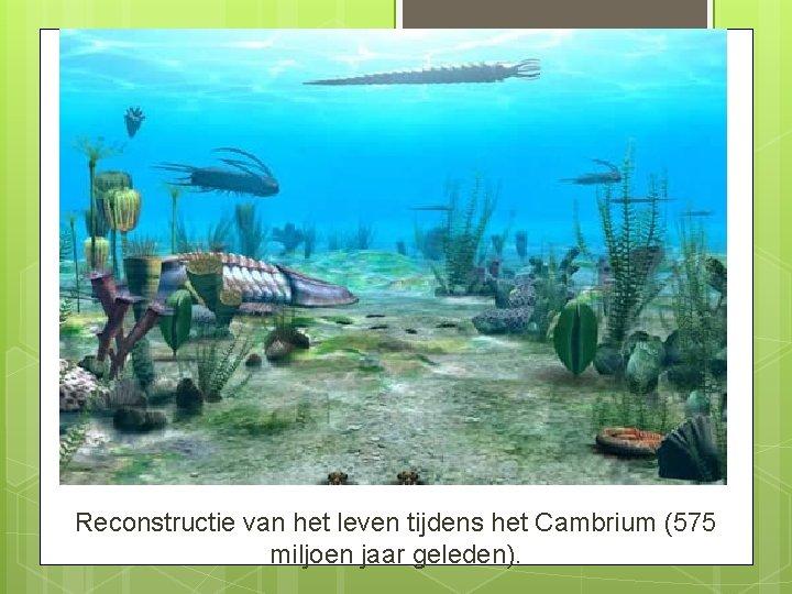 Reconstructie van het leven tijdens het Cambrium (575 miljoen jaar geleden).