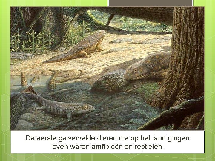De eerste gewervelde dieren die op het land gingen leven waren amfibieën en reptielen.