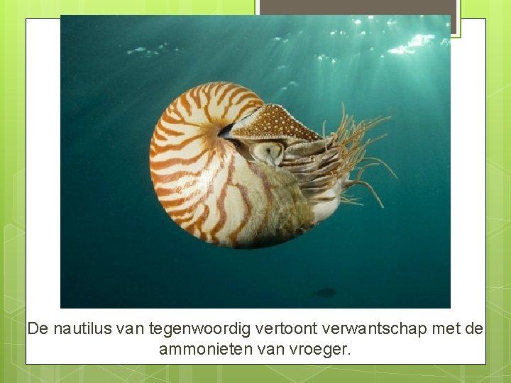 De nautilus van tegenwoordig vertoont verwantschap met de ammonieten van vroeger.