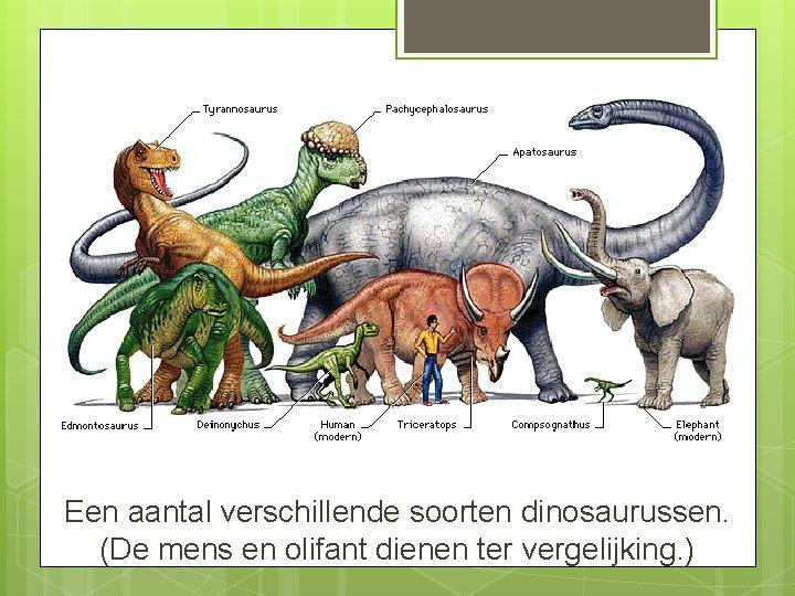 Een aantal verschillende soorten dinosaurussen. (De mens en olifant dienen ter vergelijking. )