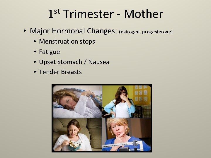 st 1 Trimester - Mother • Major Hormonal Changes: (estrogen, progesterone) • • Menstruation