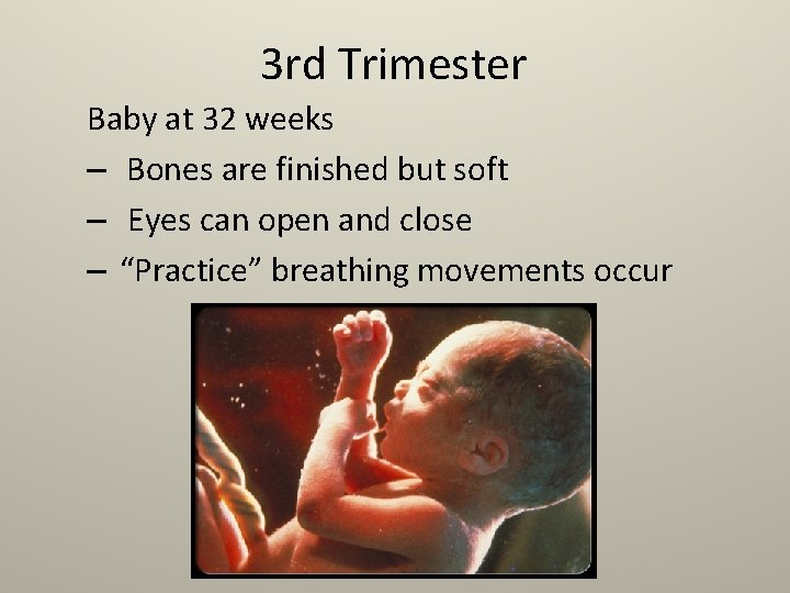 3 rd Trimester Baby at 32 weeks – Bones are finished but soft –